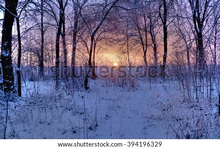 winter park in the early morning sun - stock photo