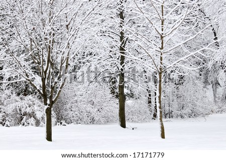 Winter park landscape with snow covered trees