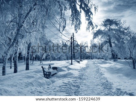 Winter  park, scenery with trees in sunny cold day - stock photo