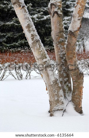 Winter park with three birch trees during snowfall - stock photo