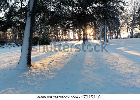 Winter park with tree - stock photo