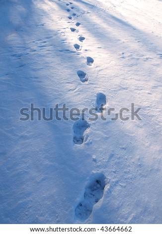 Winter path - stock photo
