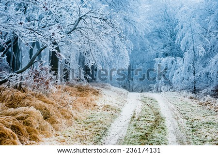 Winter path going through frozen forest - stock photo