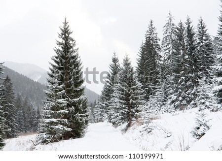 winter path in mountains