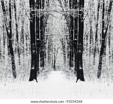 Winter path in the forest - stock photo