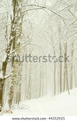 Winter path leading through the beech forest with birch tree in the foreground. - stock photo