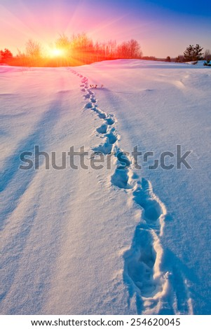 Winter path way with subset background - stock photo