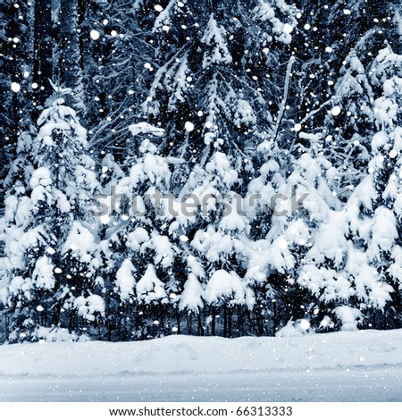 Winter picture. Forest in snowstorm - stock photo