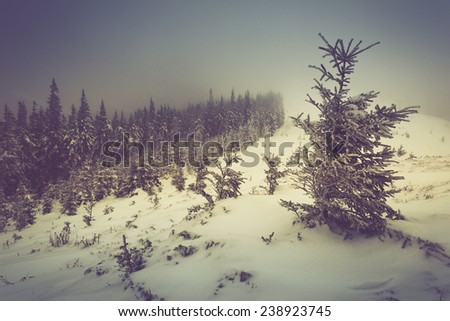 Winter pine mountain forest. New Year`s landscape. Fresh snow on the trees. Retro filter and Instagram toning effect.  - stock photo