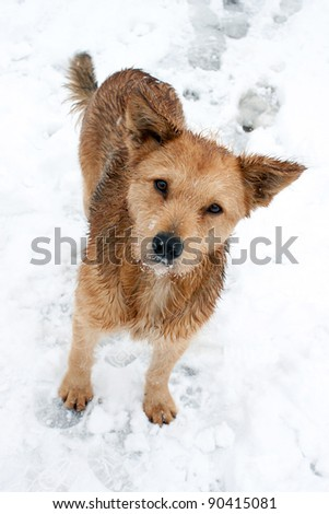 Winter portrait of a beautiful dog - stock photo