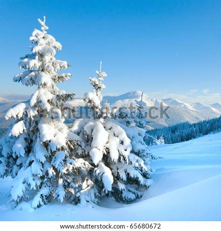 winter rime and snow covered fir trees on mountainside (Carpathian Mountains, Ukraine, photo in square proportions) - stock photo