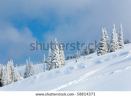 winter rime and snow covered fir trees on mountainside on overcast sky background