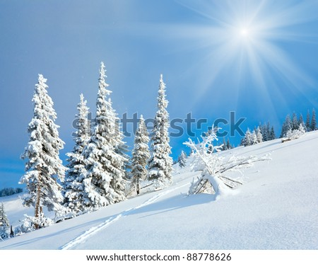 winter rime and snow covered fir trees on mountainside on sky with sunshine background - stock photo