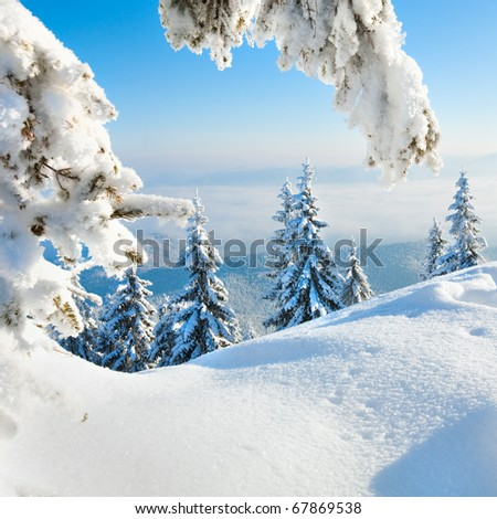Winter rime and snow covered fir trees on mountainside (photo in square proportions)