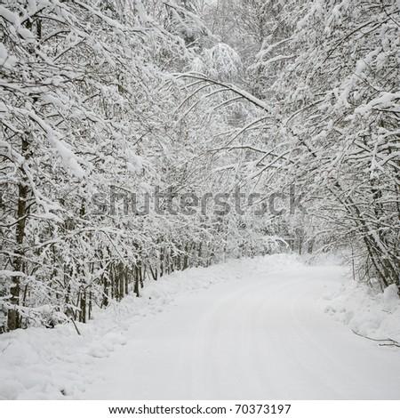 winter road - stock photo