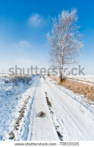 winter road and frozen tree landscape
