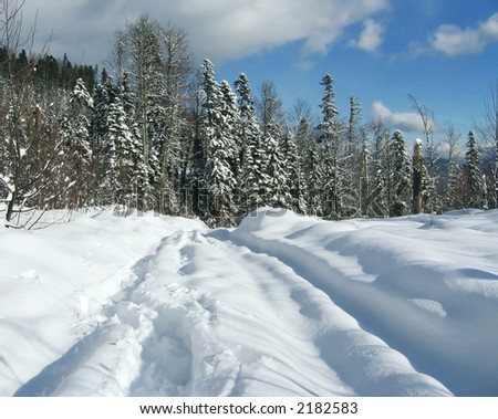Winter road for forest - stock photo