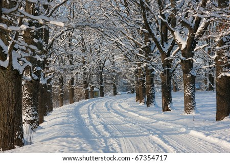 Winter road in country side with oak trees, Latvia, Baltic state, Europe - stock photo