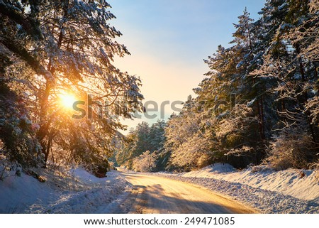 Winter road in forest - stock photo
