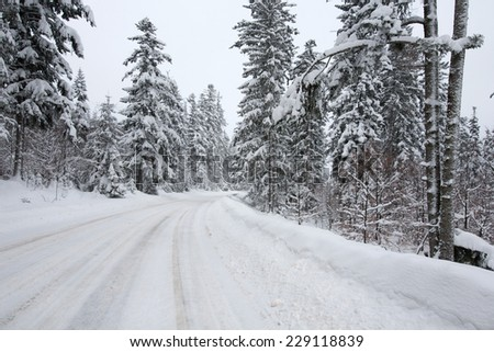 winter road in forest after snowfall, South Poland - stock photo