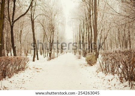 winter road in the frosty park - stock photo