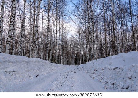 Winter road through the birch grove with high thin birches among the snow and snow drifts against the blue sky - stock photo