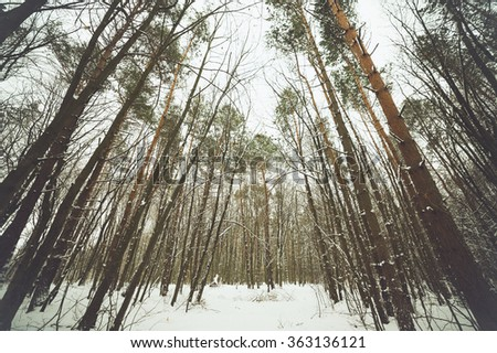 winter road through the forest - stock photo