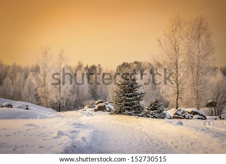 winter road to the wood - stock photo