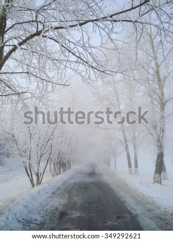 Winter roadside trees covered with snow in the fog