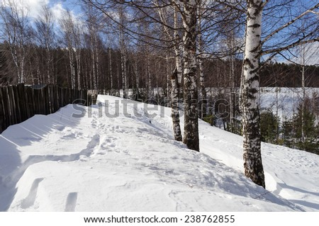 Winter rural landscape, village outskirts with bare birch trees - stock photo