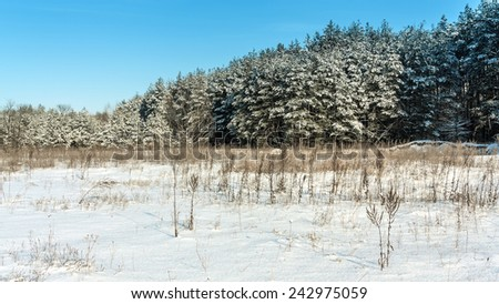 Winter rural landscape with glade and forest  - stock photo
