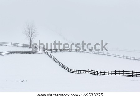 Winter rural landscape with single trees and long wooden fences - stock photo