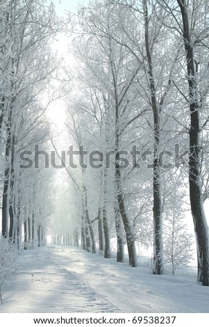 Winter rural lane among frosted trees on a cloudless December's morning. - stock photo
