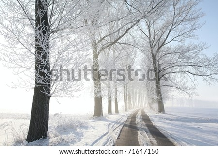 Winter rural road among frosted trees back lit by the morning sun. - stock photo