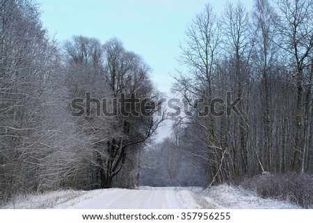 Winter rural road, forest covered with snow