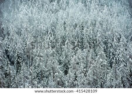 Winter scene - stock photo