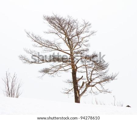 Winter scene. - stock photo