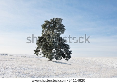 Winter scene, natural beauty - stock photo