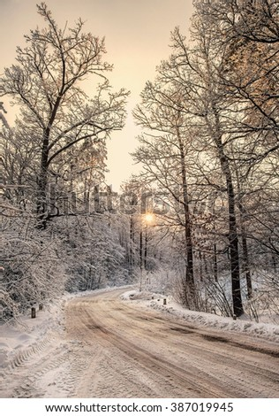 Winter scene, road and trees in the snow on the sunset.