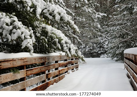 Winter scene: snowy path through snow-covered pine trees - stock photo