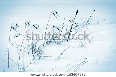 Winter scene with cold frozen reeds in the wind - stock photo