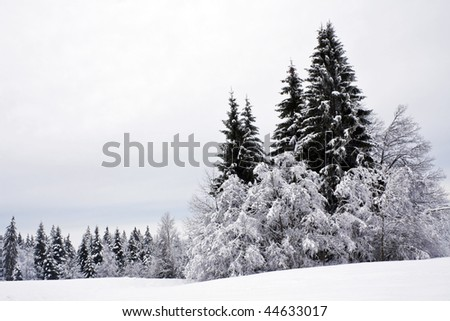 winter scene with frozen trees