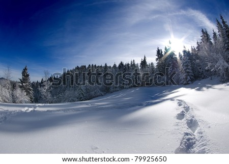 Winter scenery, forest edge near Ljubljana, Slovenia on clear sunny day