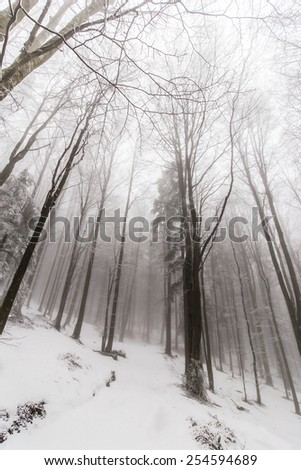 Winter scenery in the forest with birch trees and fog -dreamy effect