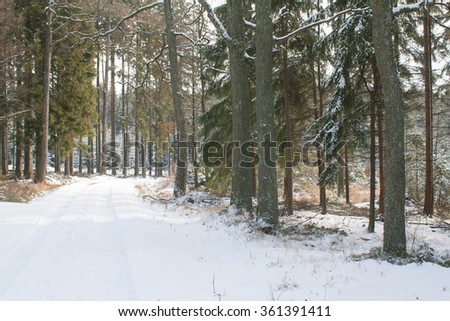 Winter scenery - magical fairytale forest, trees covered with white snow and freeze. Temperature below zero, Xmas atmosphere. Road is covered with cold ice and snow. Clear nature in winter months. - stock photo