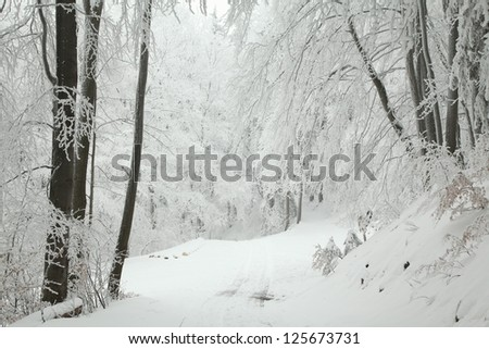 Winter scenery of a forest trail among frozen trees on a frosty January day. - stock photo