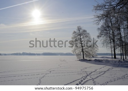 Winter scenery with animal tracks - stock photo