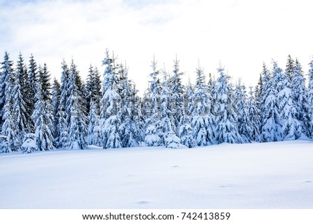 Winter scenery with snow