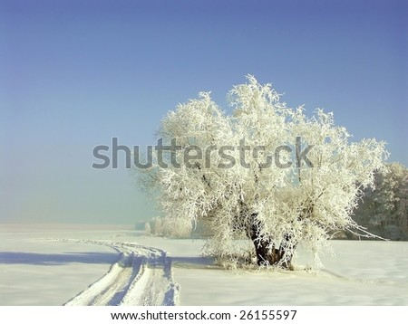 Winter scenery with white willow near rural road. Frost covers the tree branches. - stock photo