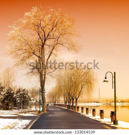 Winter scenic of a road with snow covered trees. - stock photo